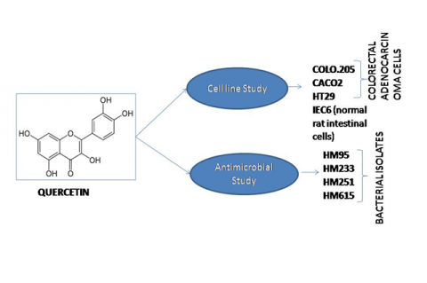 Antibacterial Potential of Quercetin against IBD Bacterial Isolates and Cytotoxicity against Colorectal Cancer