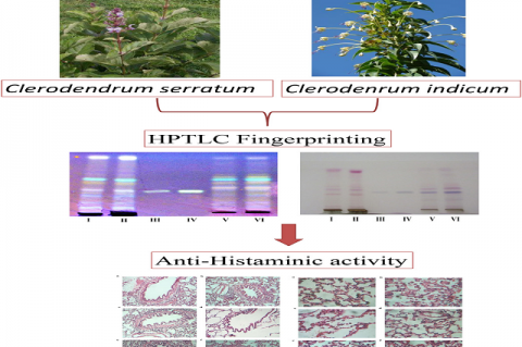 HPTLC Fingerprinting and Anti-asthmatic Activity of Roots of Two Different Sources of Bharangi